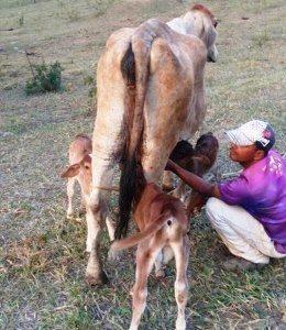 """Vaqueiro da Fazenda Esperança olhando """"Casa Grande"""" (Foto: Elton Oliveira)"""